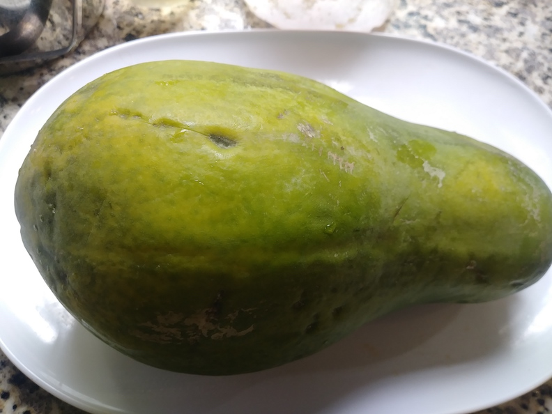 The papaya is getting ripe.. probably a few more days before you can munch on it.